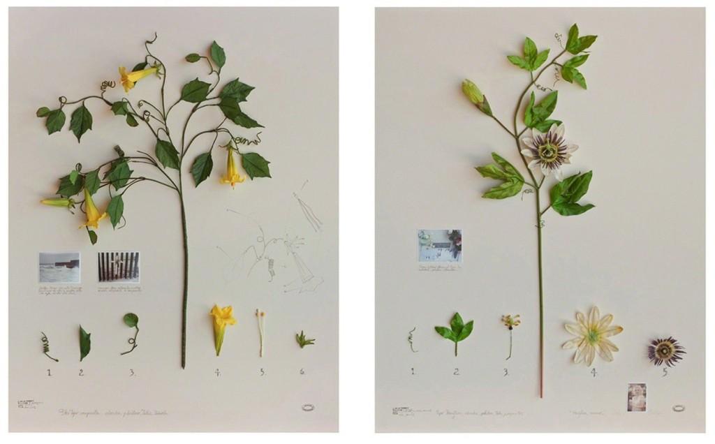 Alberto Baraya - Herbarium
