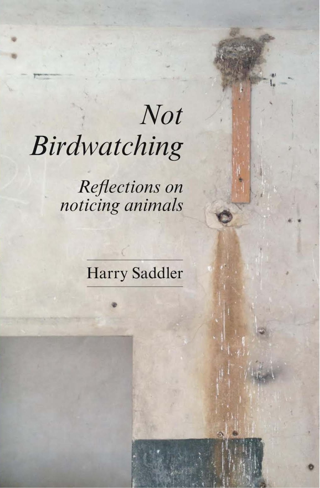 Harry Saddler Not Birdwatching
