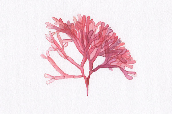 Janne Malmros - Red Algae 2