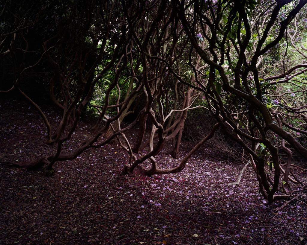 08_Ben_Cave_Bloom_LP_1500w