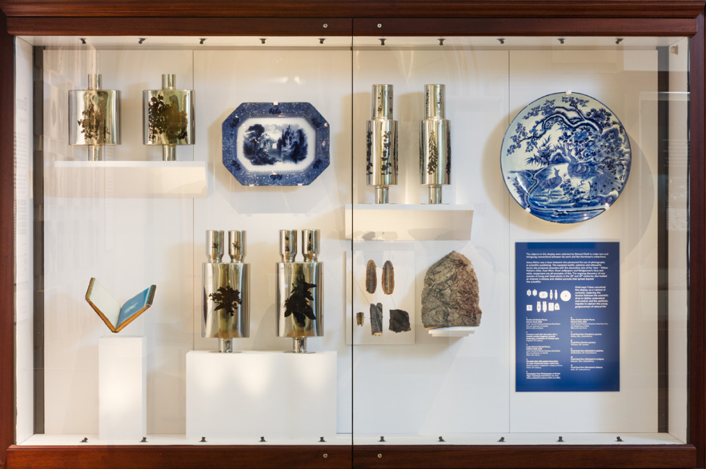 Edward Chell, installed artworks at the Horniman Museum, September 2015 Invasive species