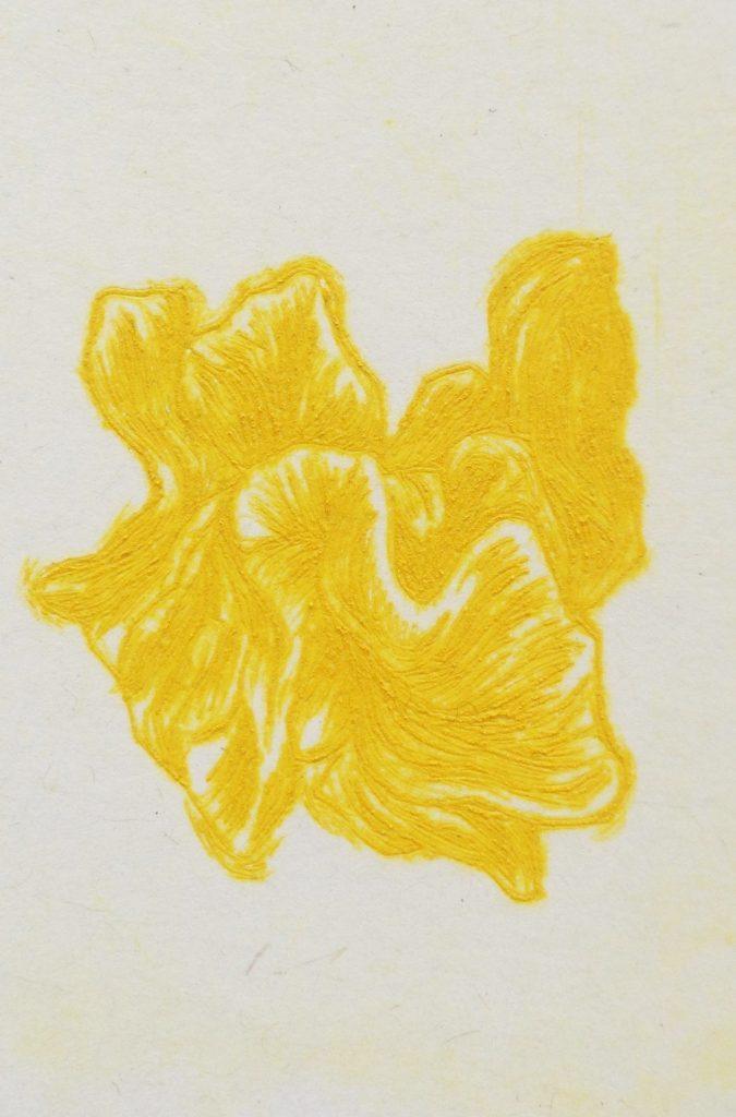 yellow brain fungus drypoint (3)