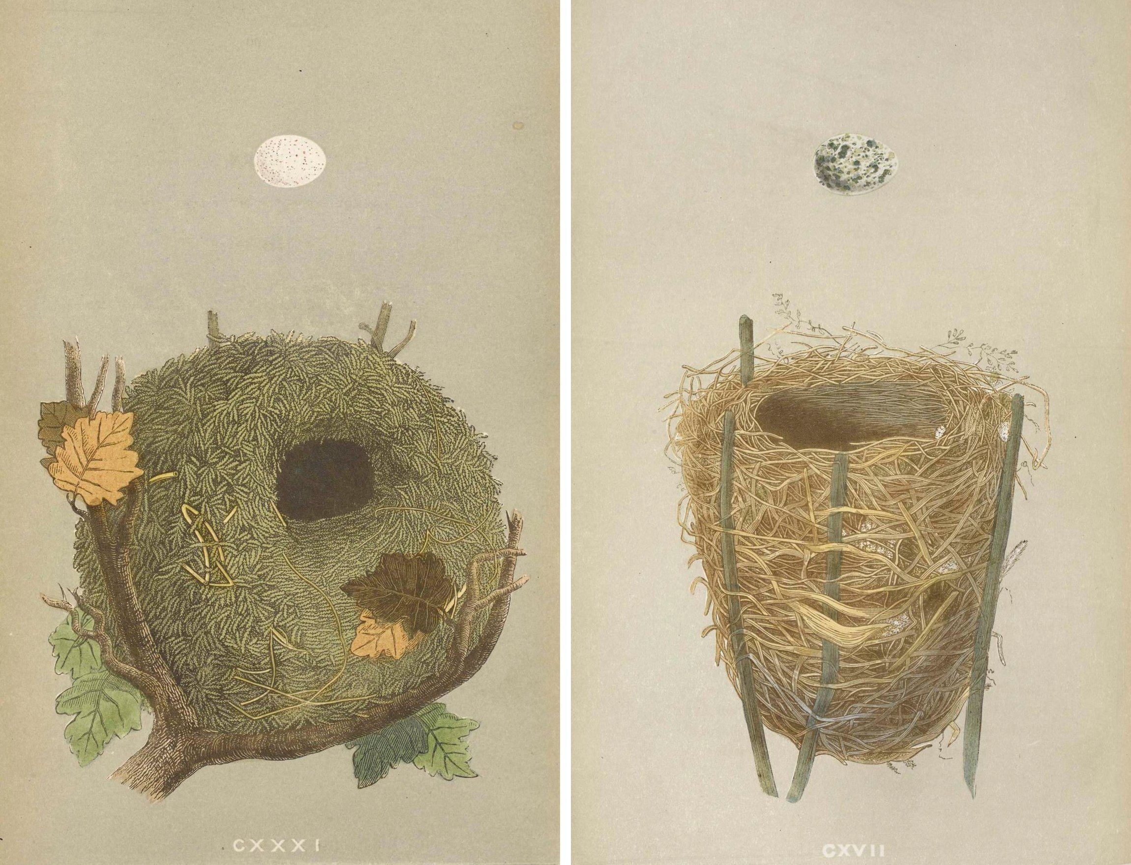 The paper Zoo, nests