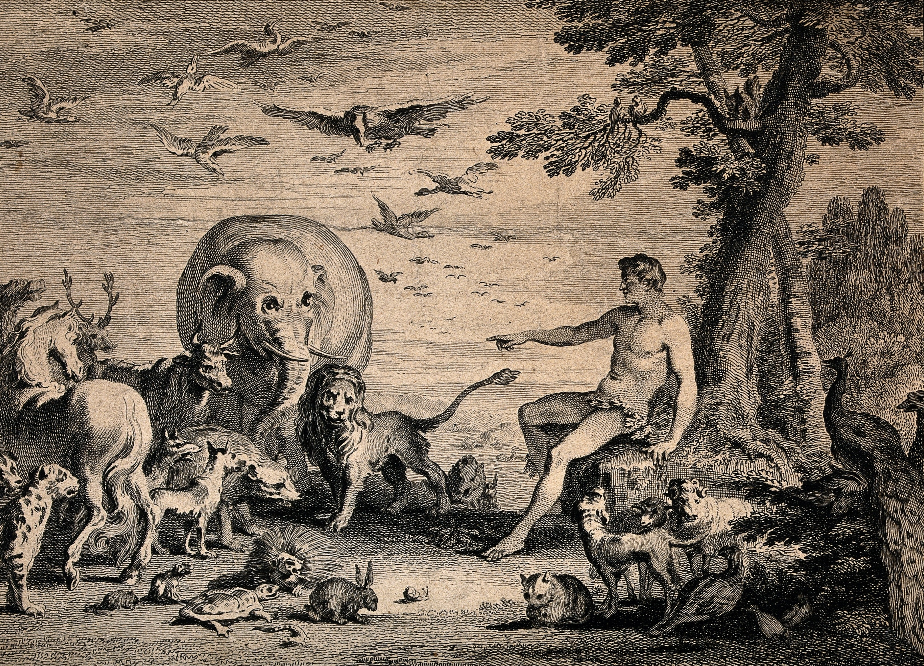 Gérard Jean Baptiste Scotin II, Adam in Paradise, 1743, Wellcome Library, London. Making Nature