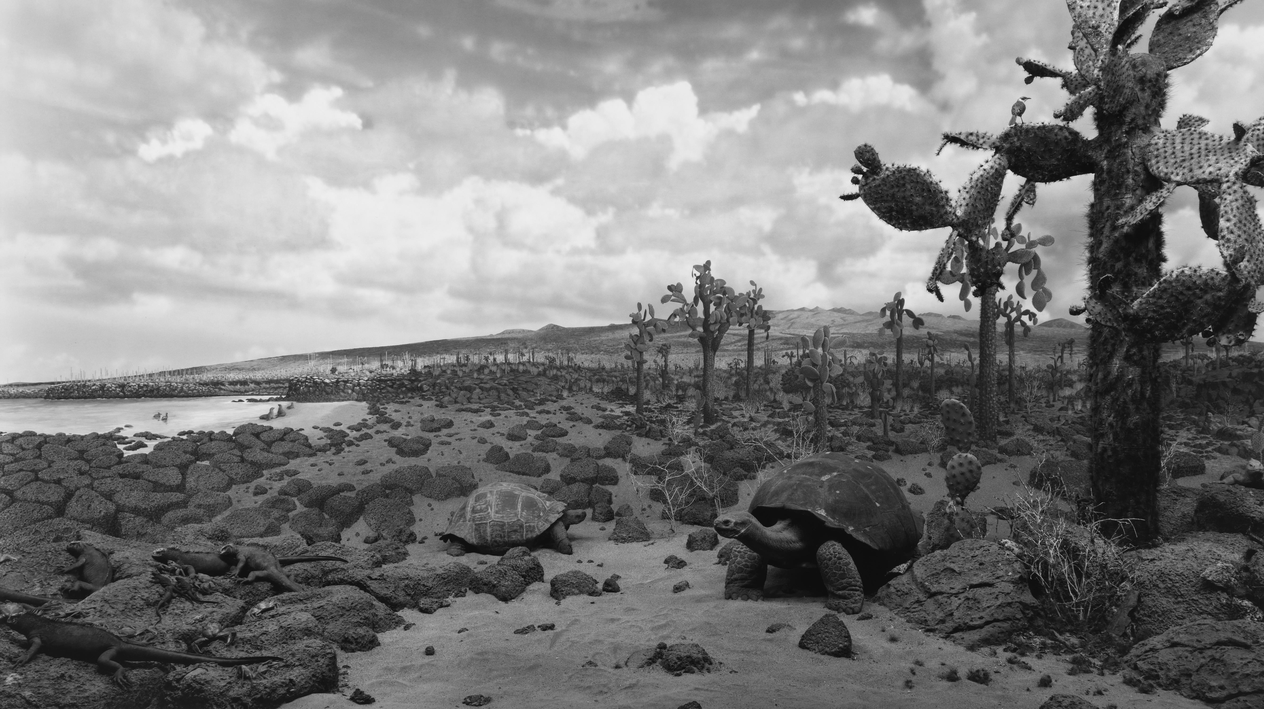 Hiroshi Sugimoto,  Galapagos, 1980 -¬ Hiroshi Sugimoto, courtesy Pace Gallery. Making Nature