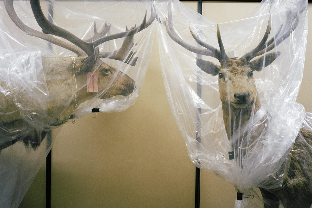 Richard Ross, British Museum, Natural History, London, England 1985