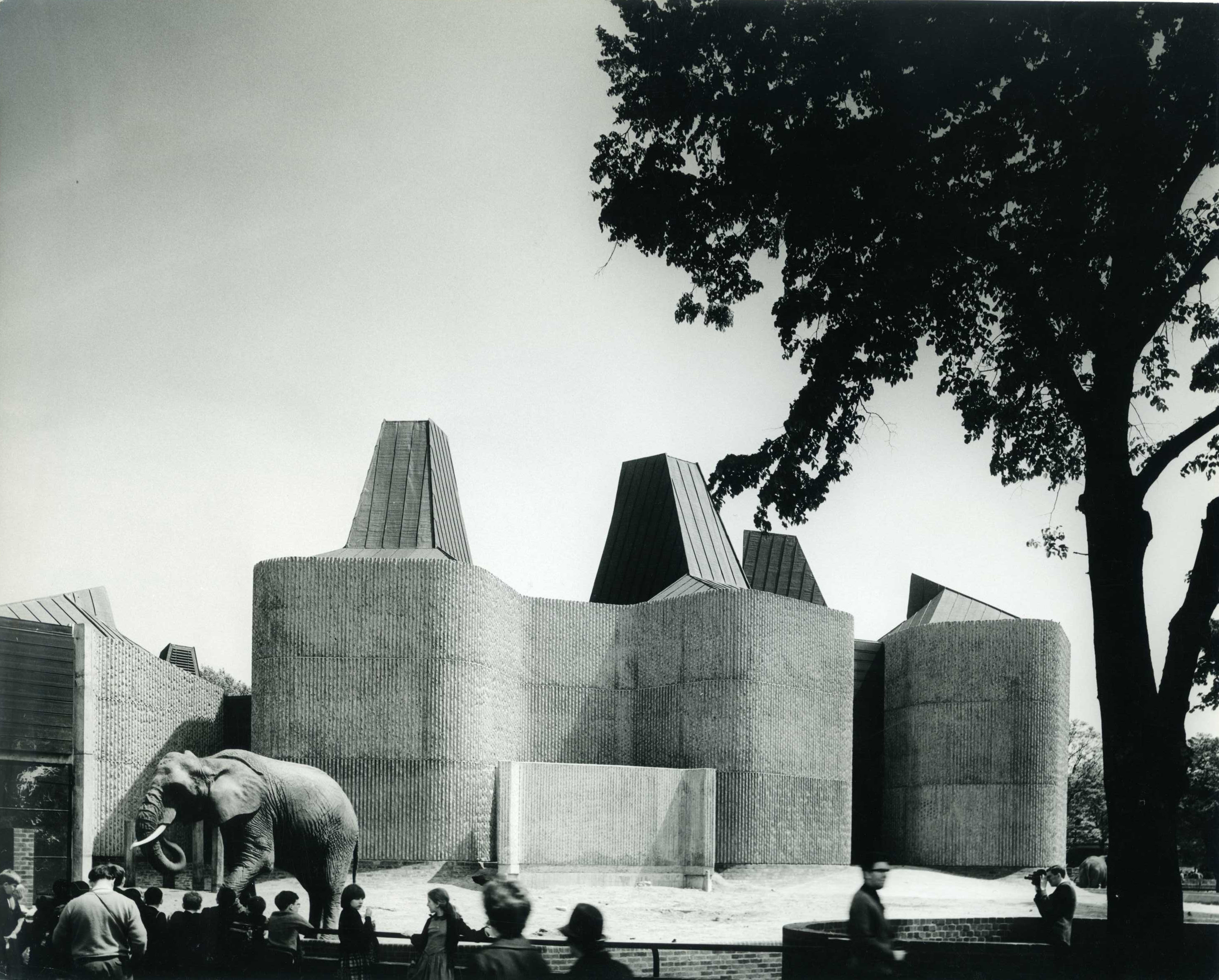 The Elephant House designed by Architects, Casson Conder Partnership. Elephant in front of pavillion with tree, photo by Henk Snoek, 1965. Making Nature.