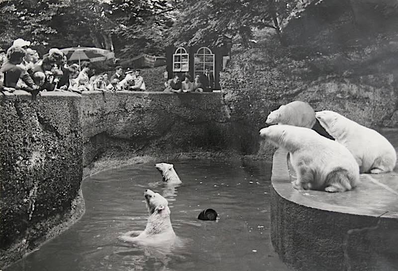 Polar Bears 6