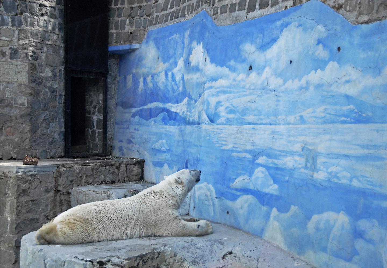 Polar Bears 7