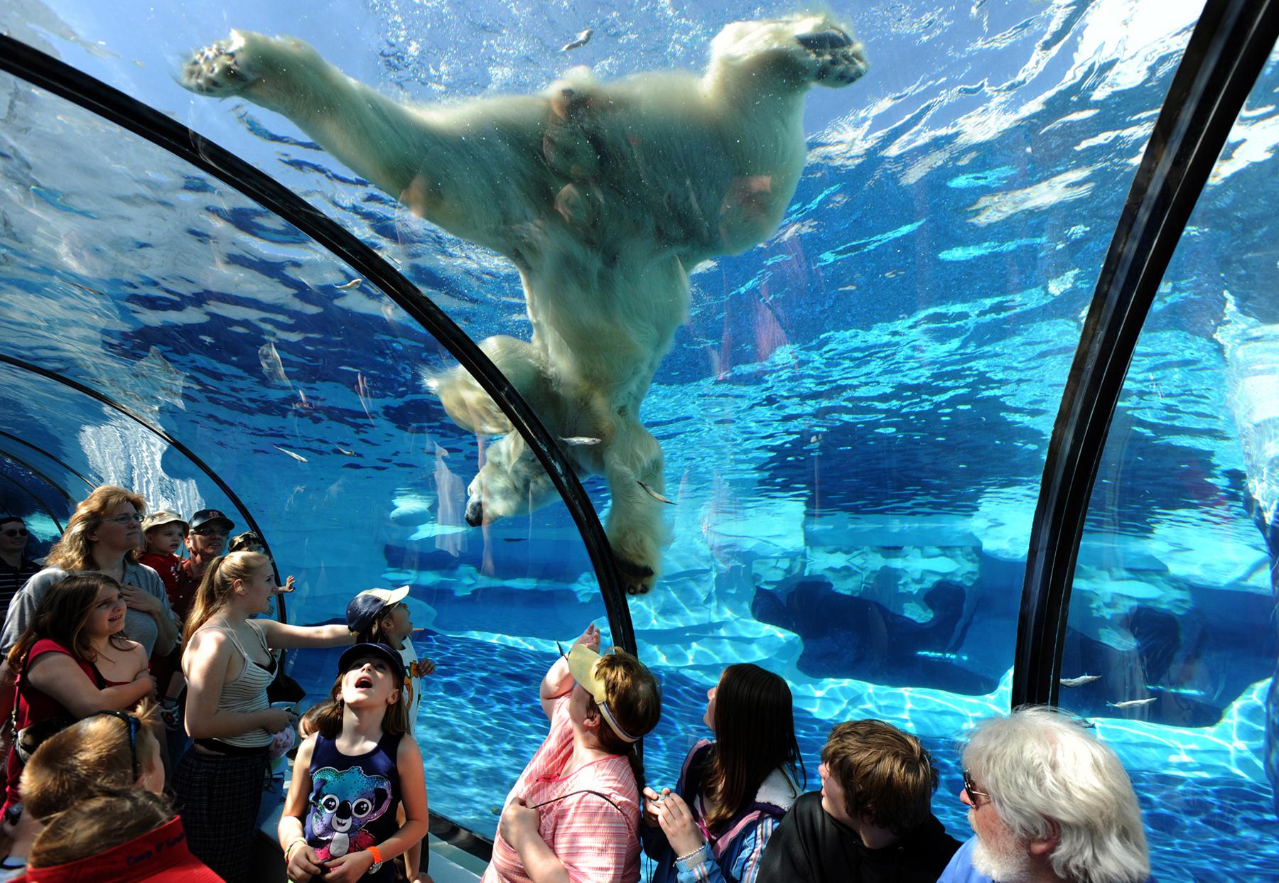 Polar Bears 8