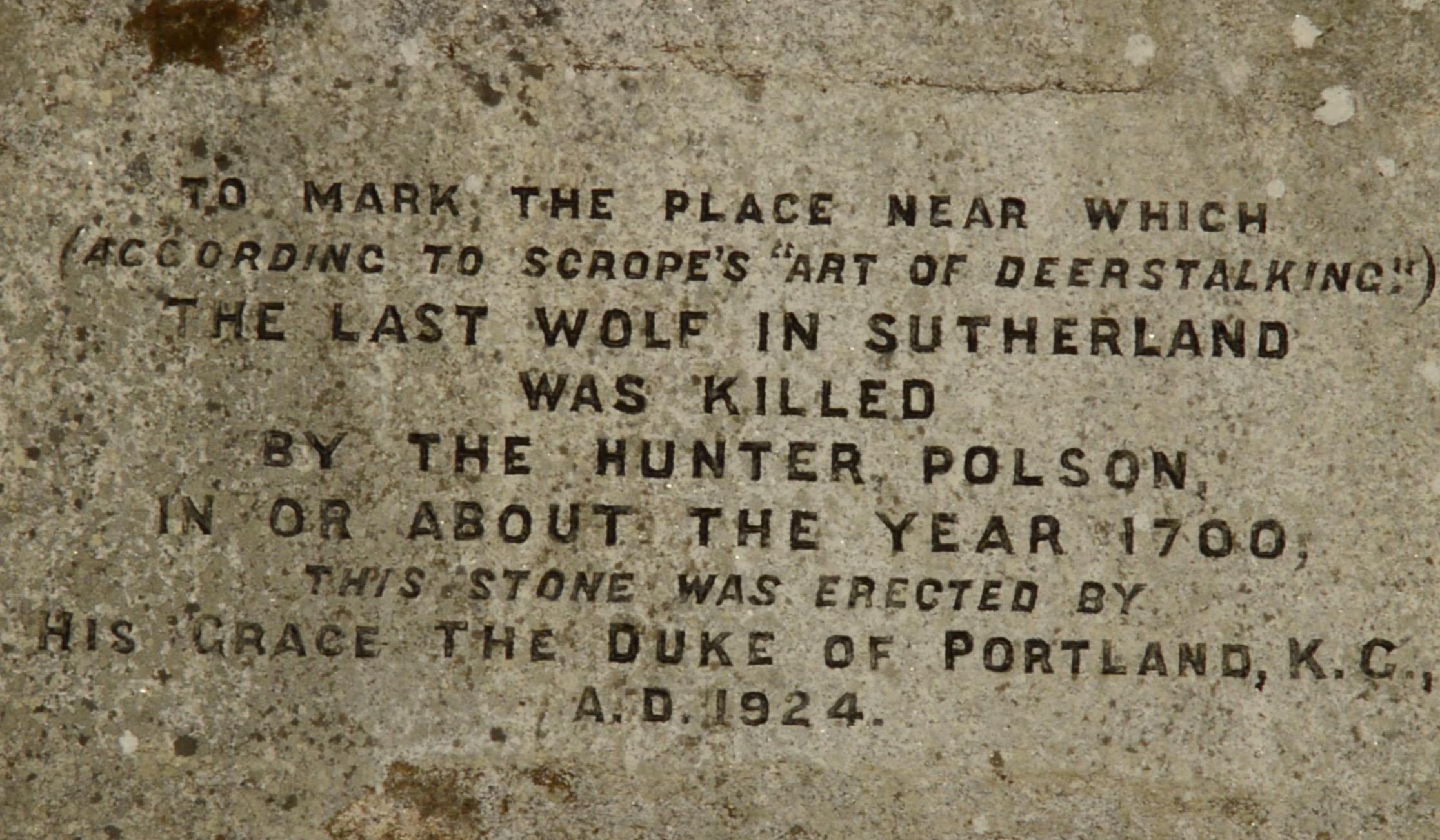 Polson Stone last wolf