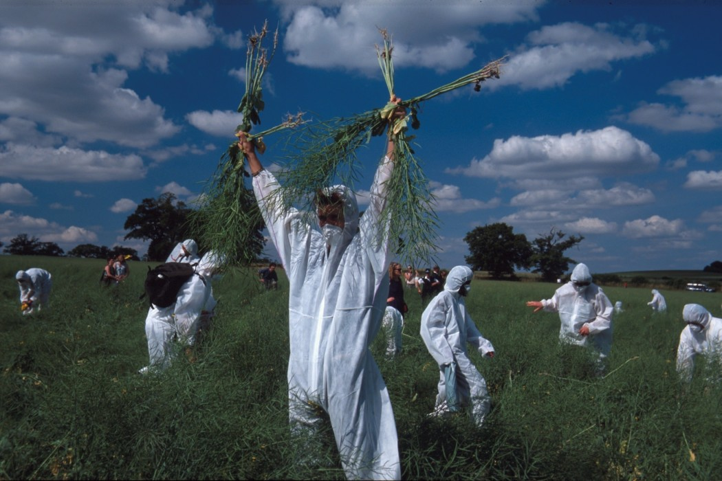 Hugh Warwick, direct action against GM crops