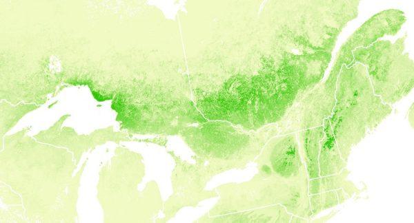 Birch map